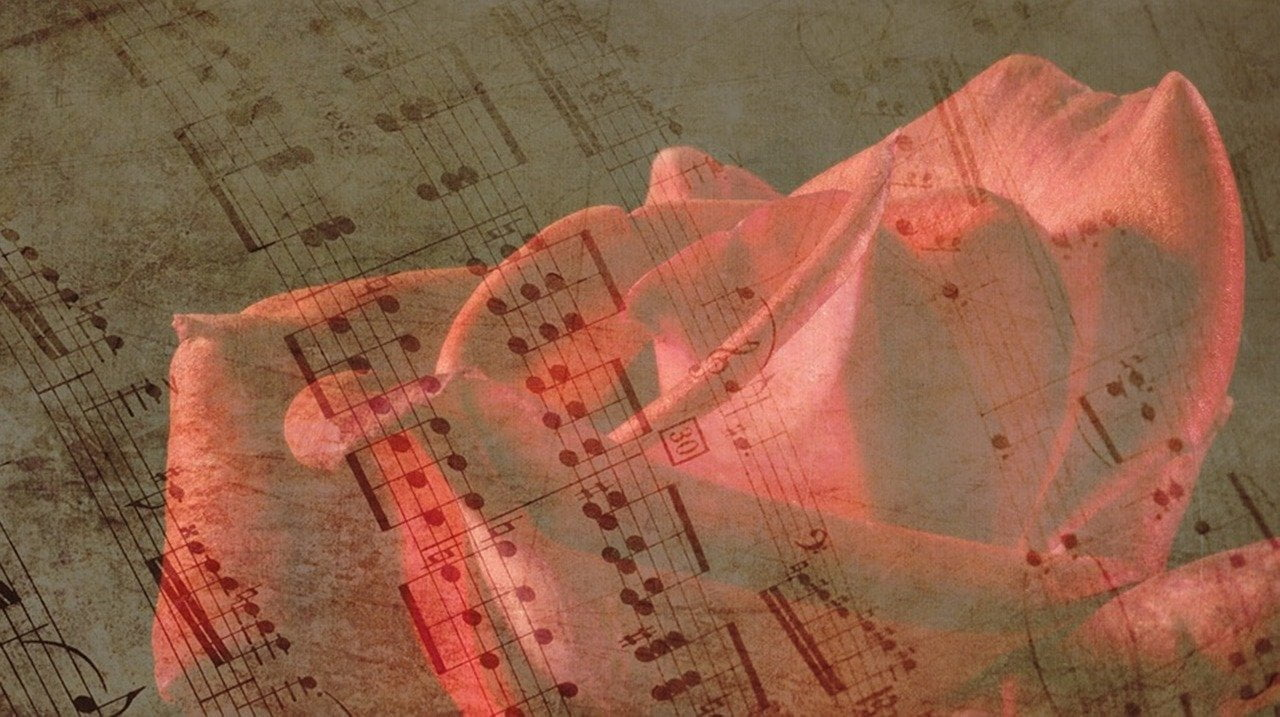rose, music, rose bloom
